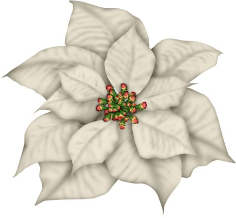 Poinsettia clipart blue Best Christmas on 722 ClipartChristmas