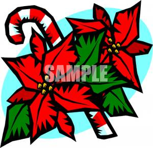 Poinsettia clipart cartoon A Poinsettia and Candy of
