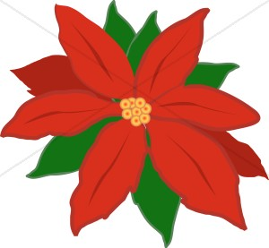 Poinsettia clipart christmas flower Collection flower  Christmas clipart