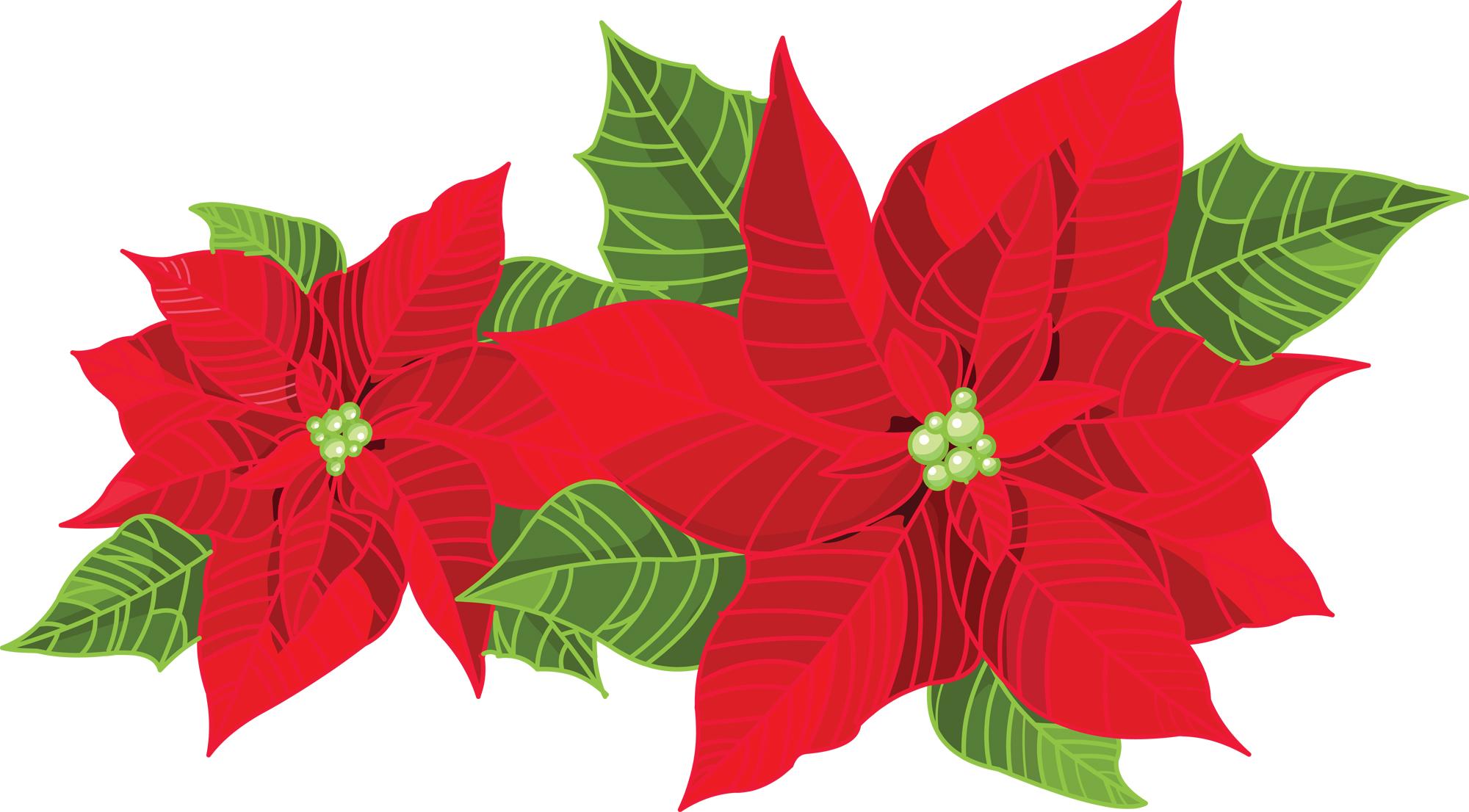 Poinsettia clipart christmas greens Entertaining If Holiday Savvy Entertaining