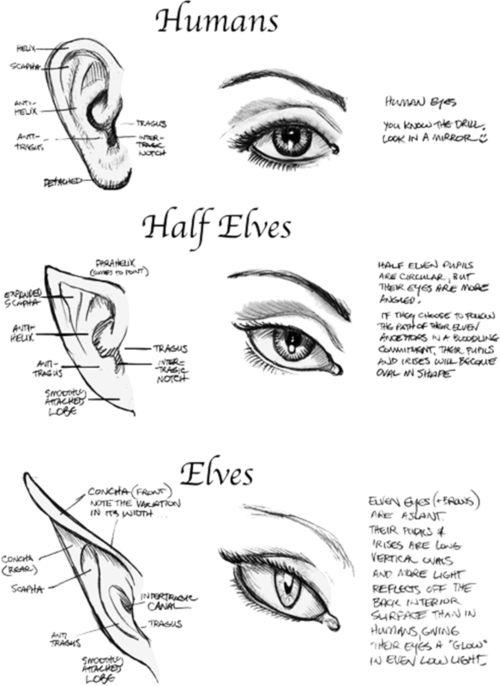 Drawn fairy elf ear And Eyes / Art Best