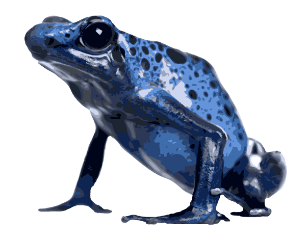 Poison Dart Frog clipart Tree Frog Clipart Frog Dixie Of Art Frog