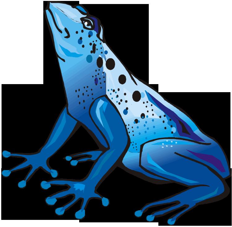 Tree Frog clipart rainforest animal #11