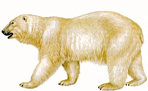 Drawn polar  bear clipart Stroll Clipart & for Bear