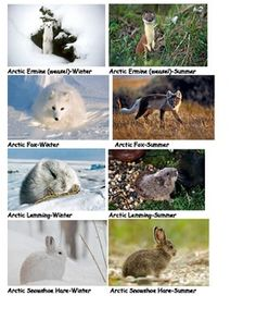Arctic clipart adaptation These photos paste for of