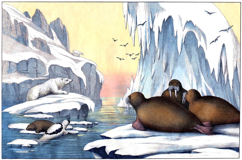 Tundra clipart arctic landscape #2