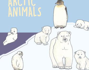 Arctic clipart adaptation Color Arctic clipart Animals Painted