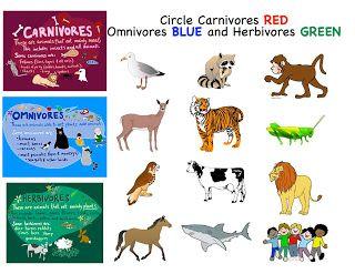 Baboon clipart omnivore Carnivores week 2 best Pinterest