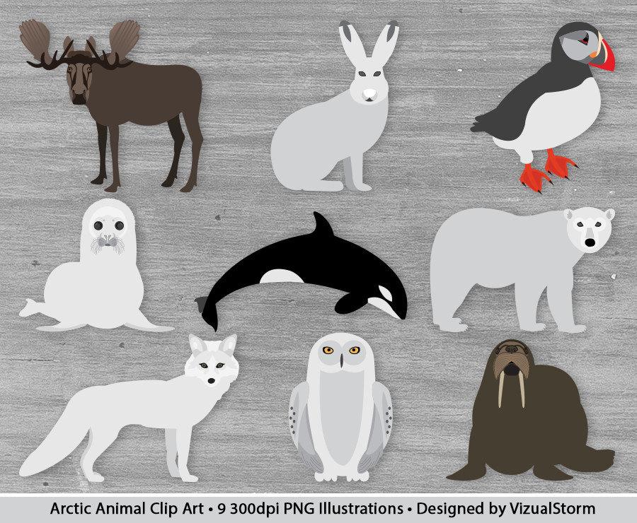 Arctic clipart polar animal Winter  Graphics Scrapbooking Arctic
