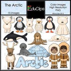 Tundra clipart arctic animal #5
