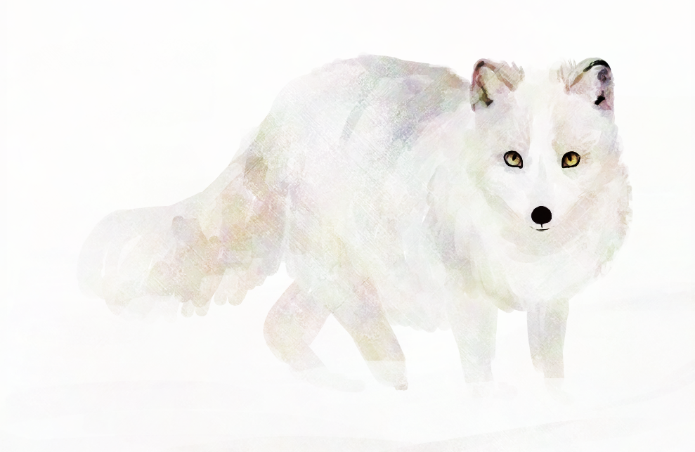 Arctic Fox clipart male HELP THE HELP THE FOX