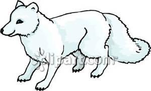 White Wolf clipart arctic fox Bushy Royalty Free Arctic Royalty