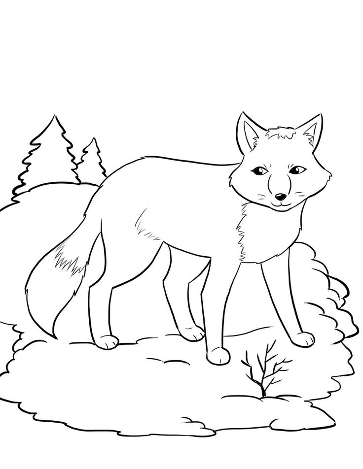 Arctic Hare clipart coloring Kids Worksheet Hibernating for arctic/polar