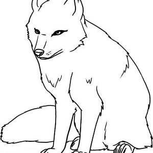 Polar Fox clipart printable Pages Arctic baby fox page