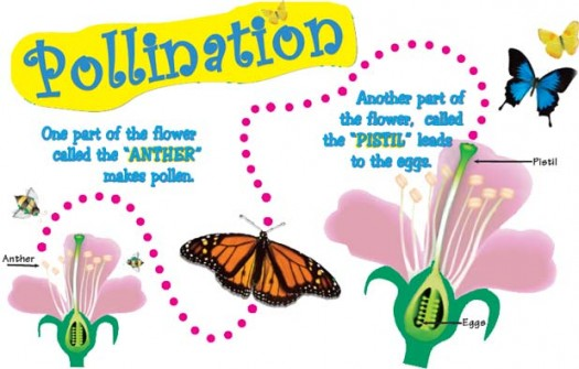Pollination clipart And Quiz Fertilization for Facts