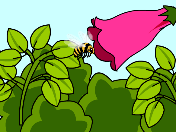 Pollination clipart Pollination  BrainPOP