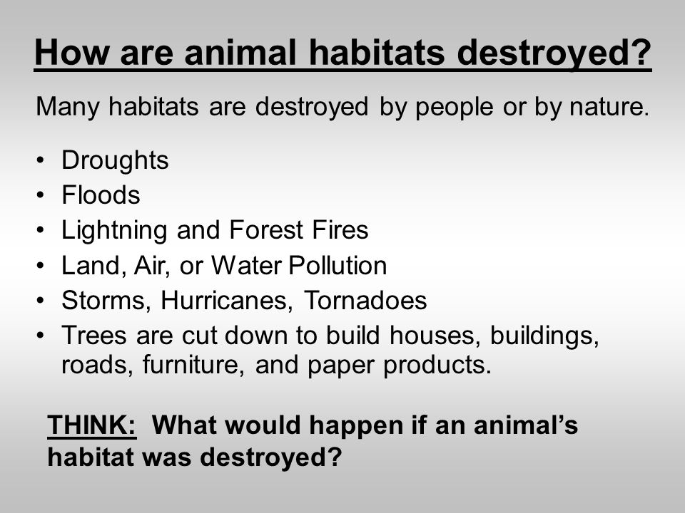 Pollution clipart habitat destruction #2