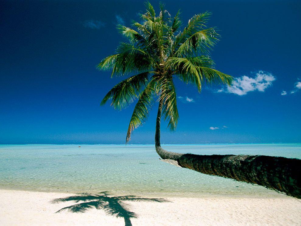 Polynesia clipart caribbean  Polynesia Palm Sunsurfer Bora