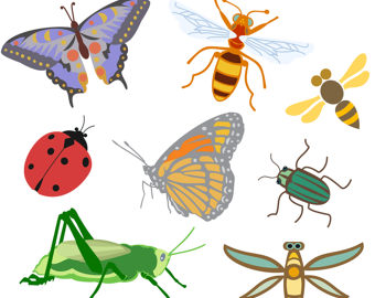 Polynesia clipart pollination Clip Dragonfly Insects Clip Clip