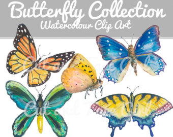 Polynesia clipart pollination Art Insect Butterflies clipart Watercolor