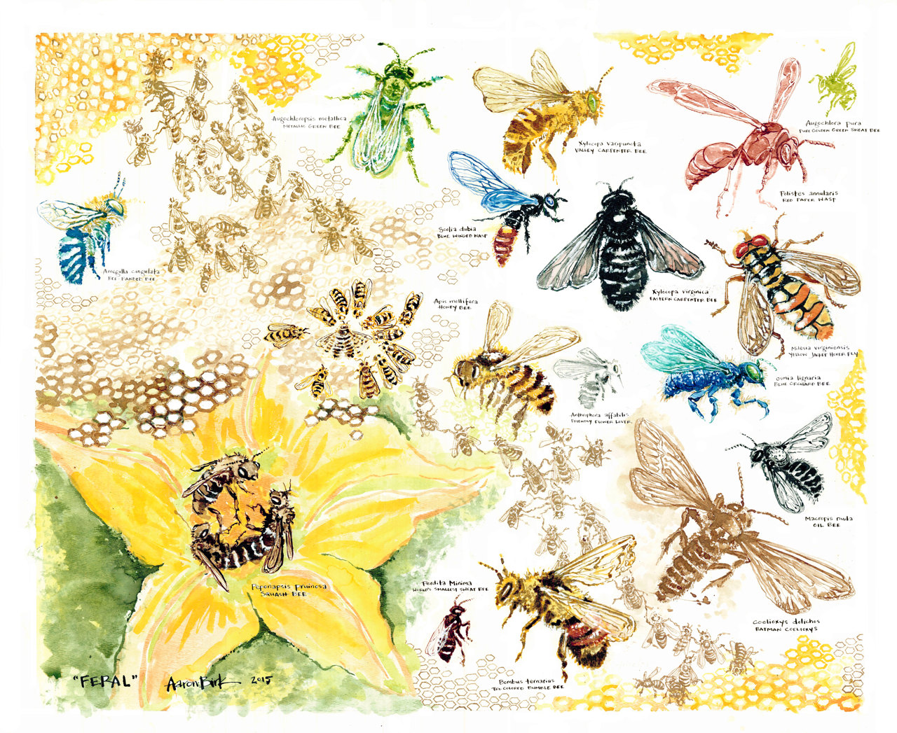 Polynesia clipart pollination Pollination Bees Native poster and