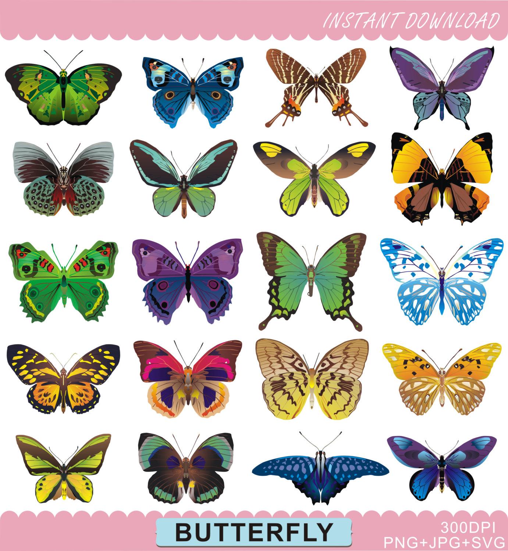 Polynesia clipart pollination Digital  Clipart is Art