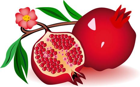 Pomegranate clipart vector Clipart Vector free download pomegranate
