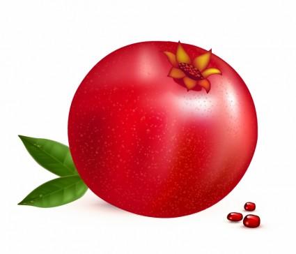 Pomegranate clipart vector Art org Pomegranate photo Fruit