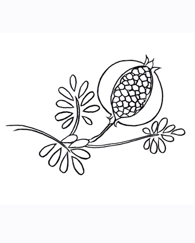 Pomegranate clipart colouring page Seeds Coloring Coloring Fantasy Picture