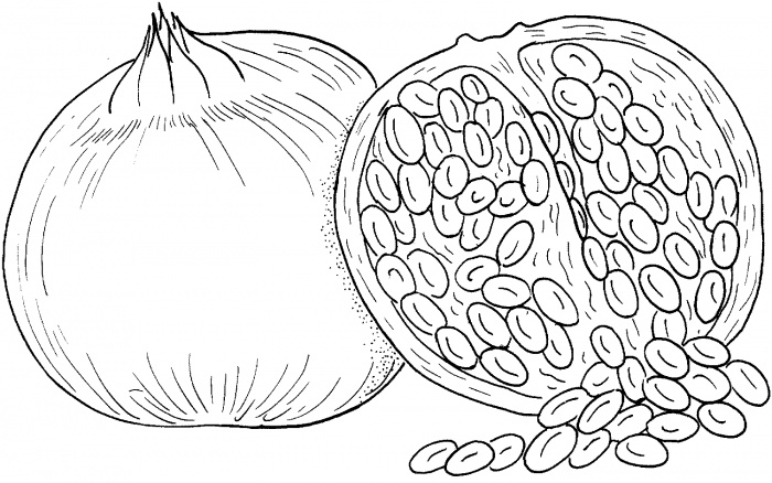 Pomegranate clipart colouring page For Coloring Your 24 Printable