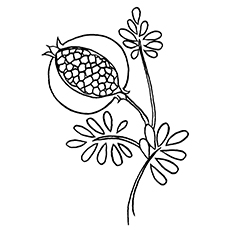 Pomegranate clipart colouring page Coloring Pomegranate Pages Top Pomegranate