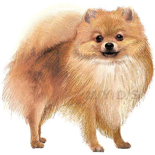 Pomeranian clipart Pomeranian Pom Pom Large /