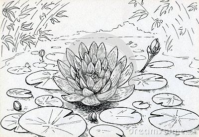 Drawn pond lily pond Pond Pond Drawn Clipart Zone