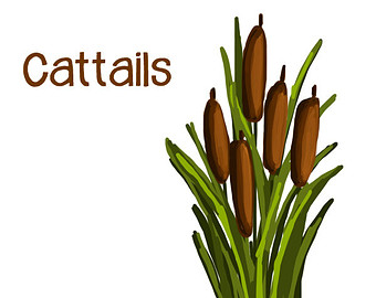 Wood Duck clipart cattails Pond Pinterest Clipart Frogs Clipart