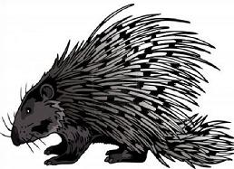 Porcupine clipart Porcupine Clipart porcupine Free
