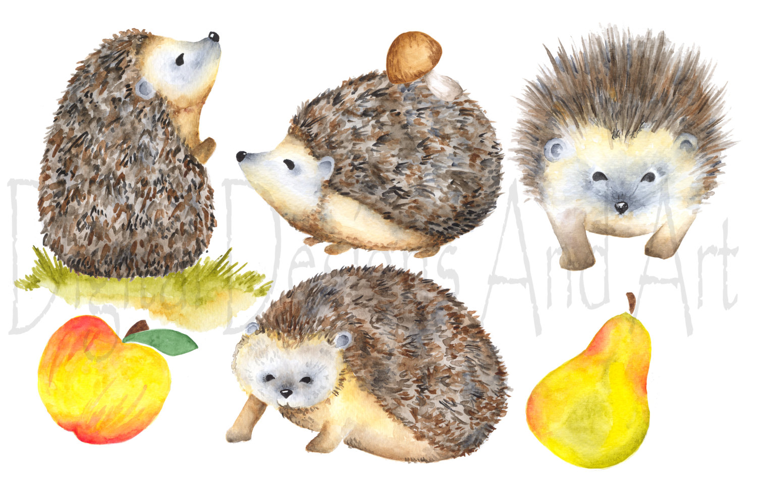 Hedgehog clipart forest animal  Watercolor clipart a Forest