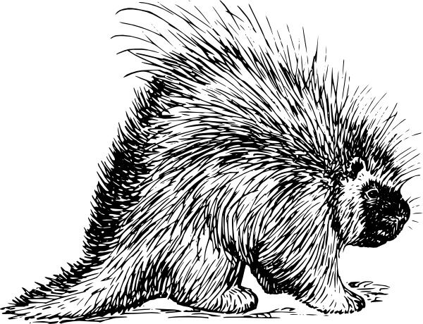 Rodent clipart easy animal #5