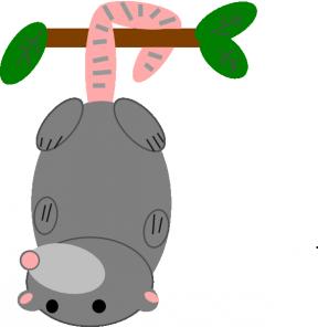 Possum clipart opossum #14