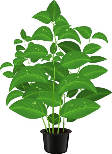 Pot Plant clipart About 188 ART Pin this