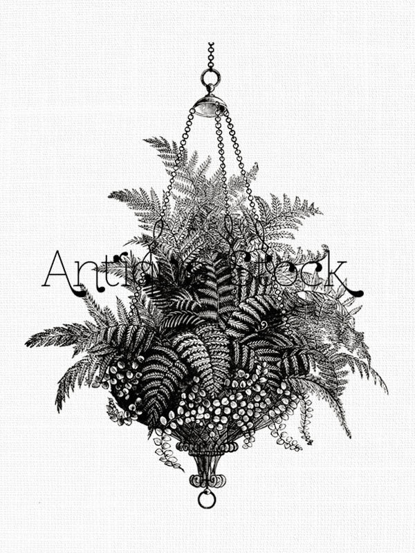 Drawn pot plant black and white Drawing Flower Hanging Clip Flower