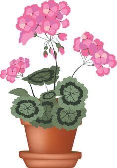 Petal clipart potted flower Pot ✿° Flower Geranium plant