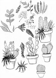 Drawn pot plant flower On Vector painted More clipart