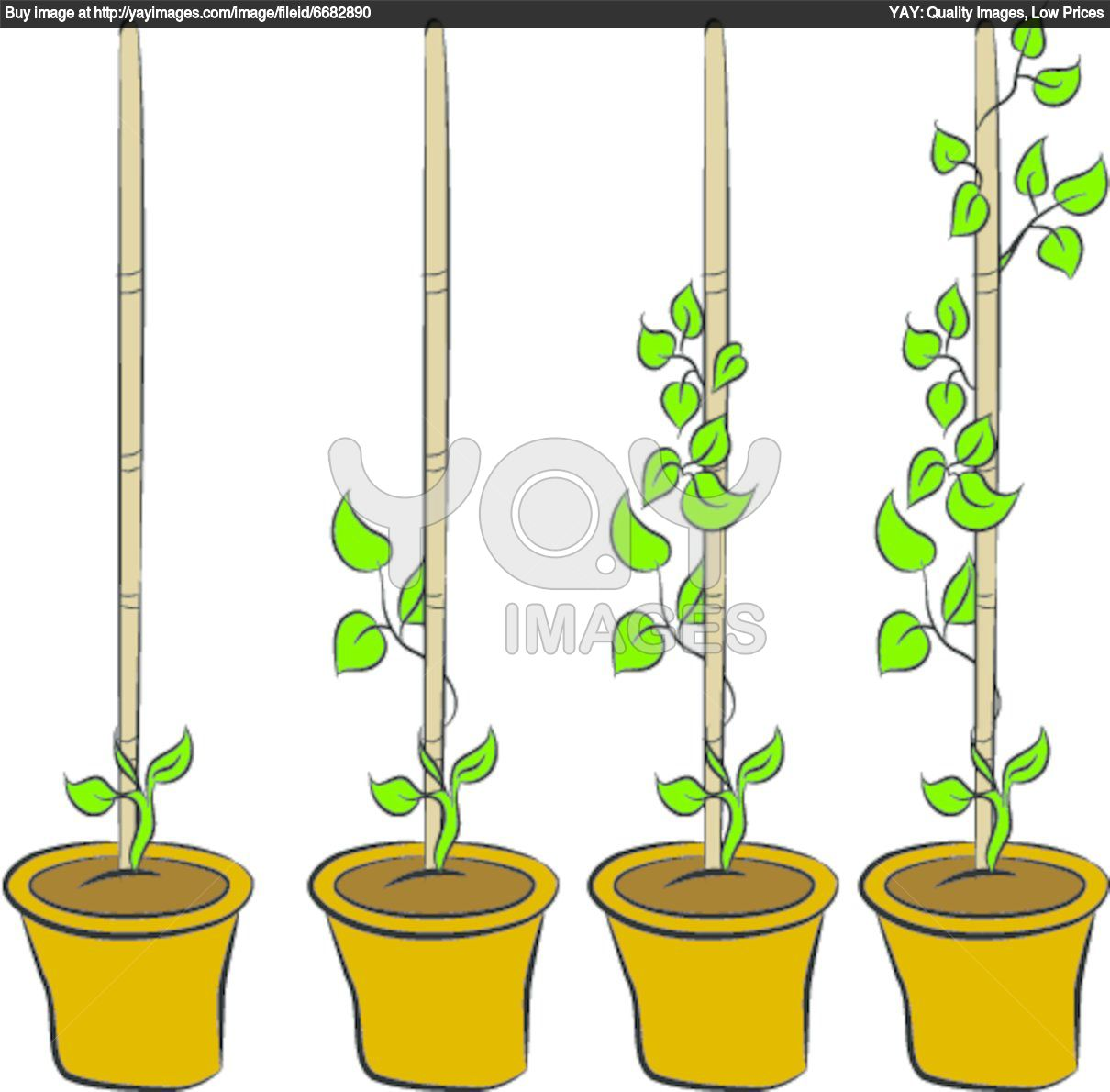 Plant clipart growing stage Plant clipart BBCpersian7 plant Money