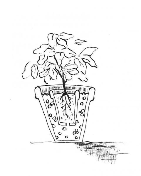 Drawn pot plant the word Extension Grown potted plant Plants