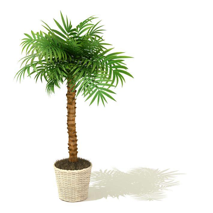 Plant clipart tall Art Models Tree Clip 3D