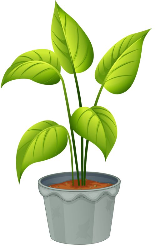 Plant clipart flowering plant Images POTTED CLIP and PLANTS