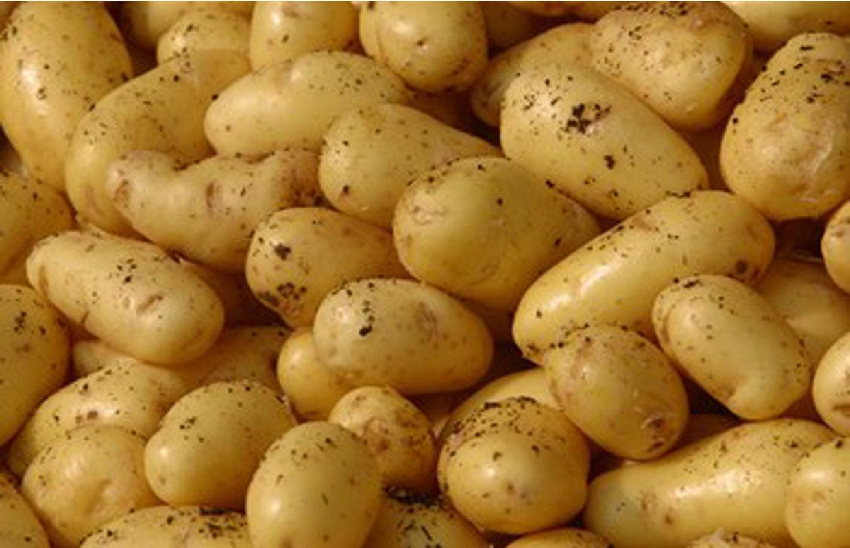 Potato clipart brown Salad Potato Potato extravaganza Sunny