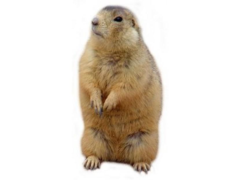 Prairie Dog clipart Best Best Dog Clipartion Blog