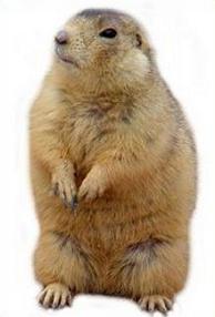 Prairie Dog clipart Prairie Dog Prairie Free Clipart