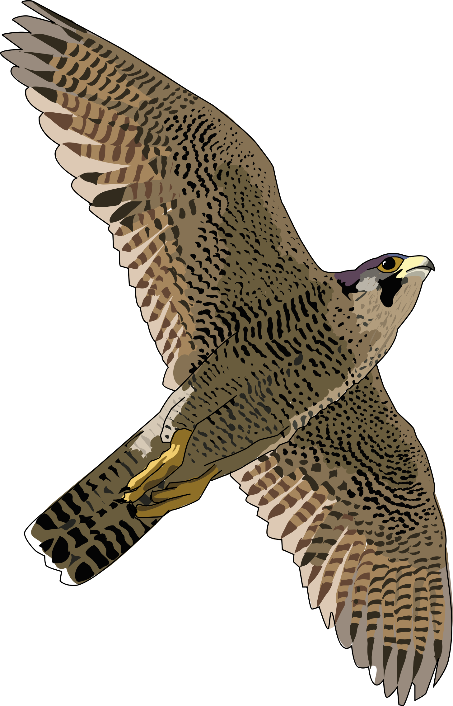 Prairie Falcon clipart Images PNG Advertisement Falcon Transparent